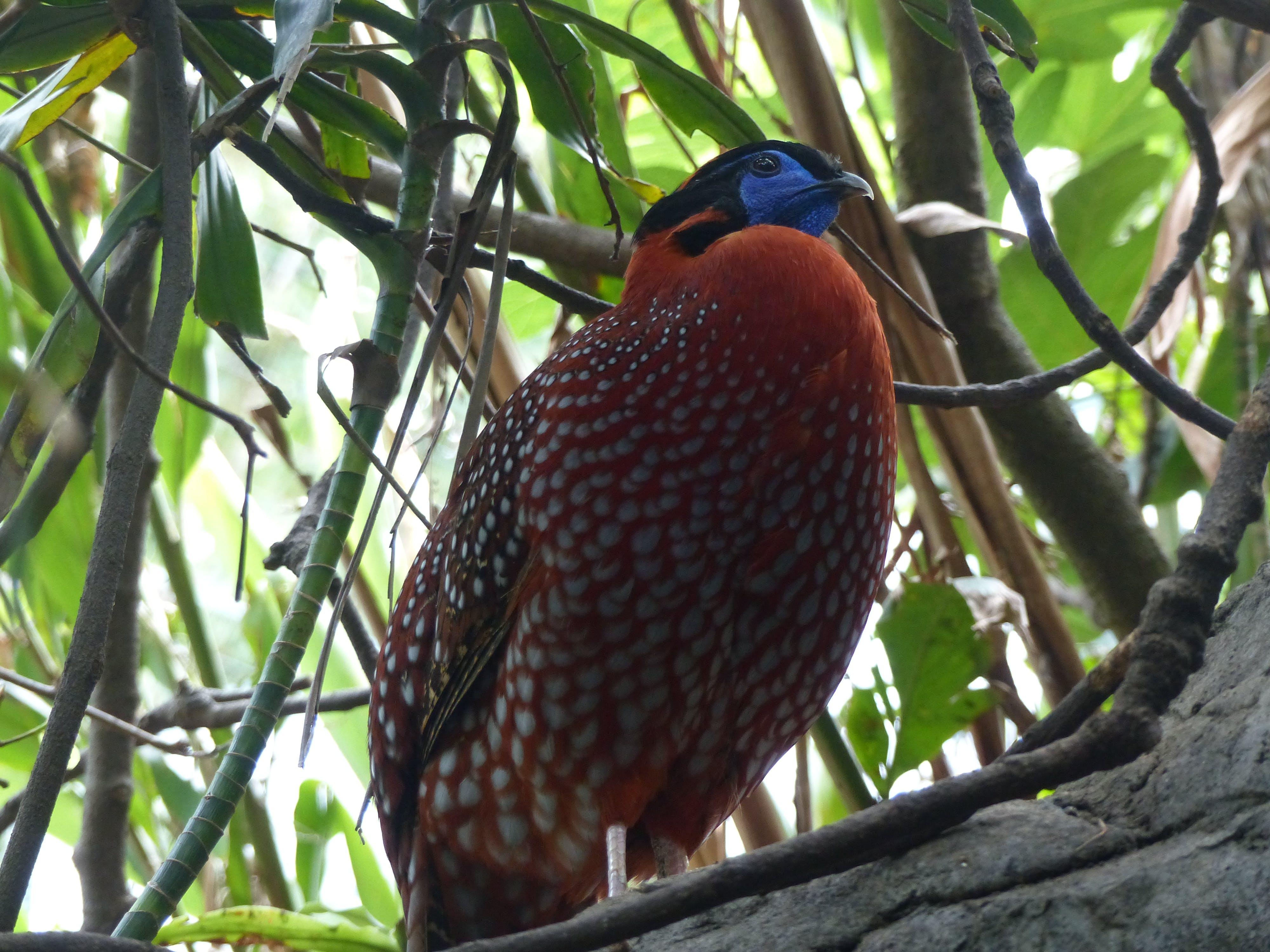 Foto d'estoc gratuïta de colorit, natura, plomall, plomes