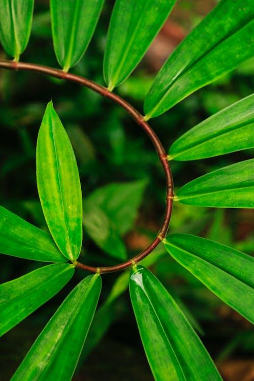 Бесплатное стоковое фото с ботанический, завод, зеленый, окружающая среда