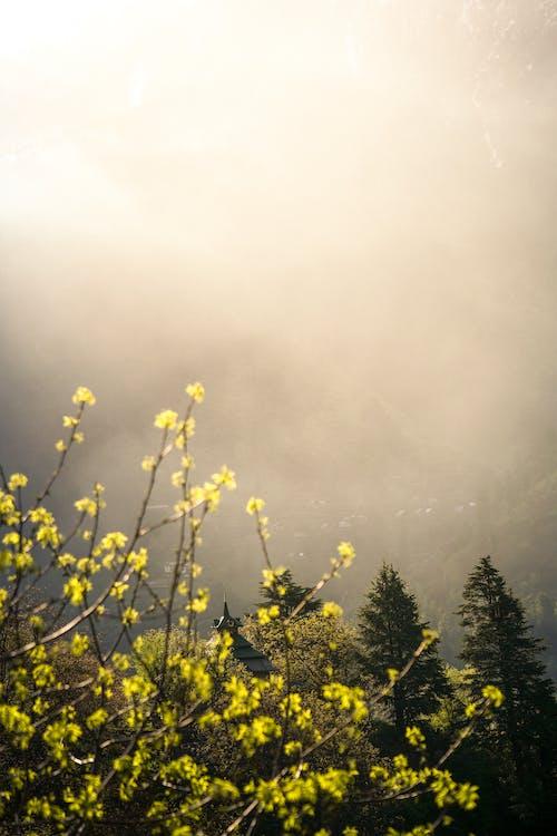 Free stock photo of early morning, fog, foggy