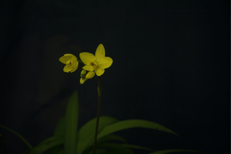 Free stock photo of beautiful flowers, blooming, botanical, gardencity