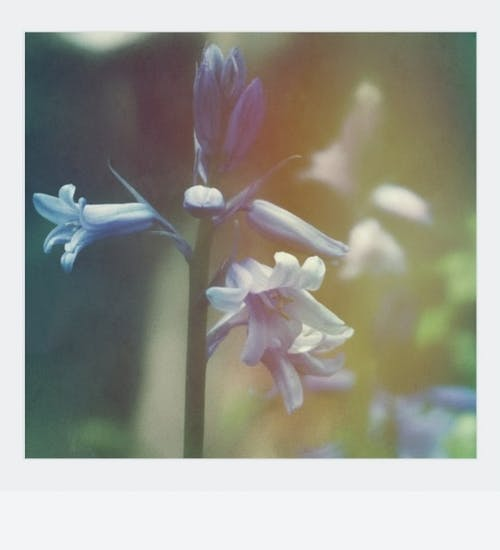 Kostenloses Stock Foto zu blatt, blauen blüten, blühen