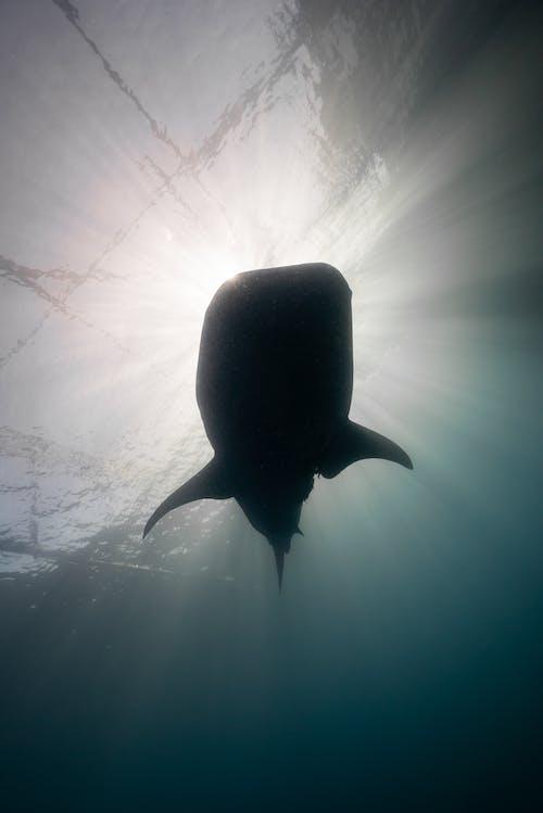 Základová fotografie zdarma na téma bouře, divočina, gigant oceánu