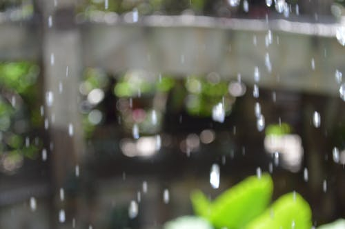 Free stock photo of defocused, green, out of focus, raindrops