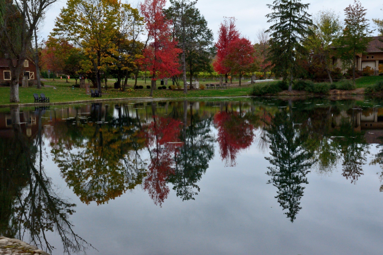 Free stock photo of autumn, beautiful, fall, nature