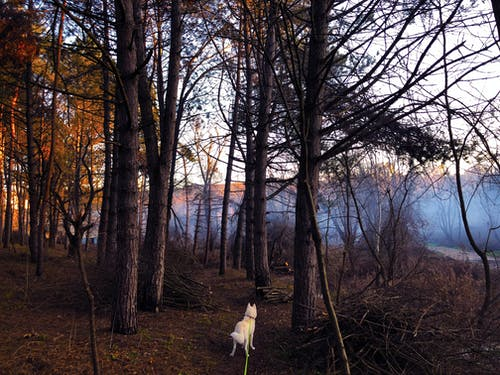 Free stock photo of dog, fog, husky