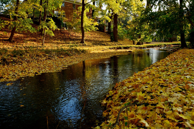 Free stock photo of yellow, autumn, fall, pond