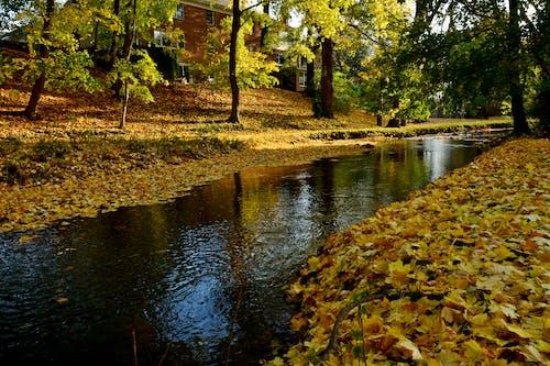 Free stock photo of colors, foliage, pond, yellow