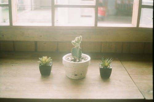 Fotobanka sbezplatnými fotkami na tému drevený, interiérový dizajn, izba, kaktus