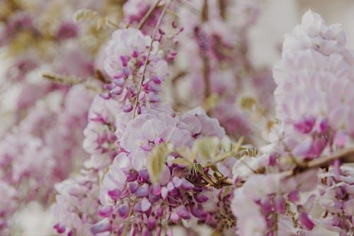 ağaç, Bahçe, bitki örtüsü içeren Ücretsiz stok fotoğraf