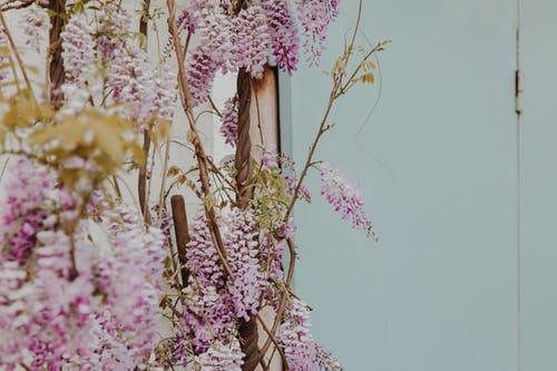 Purple and White Flowers on Brown Wooden Stick