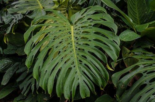 Ilmainen kuvapankkikuva tunnisteilla kasvi, kasvikunta, kasvillisuus