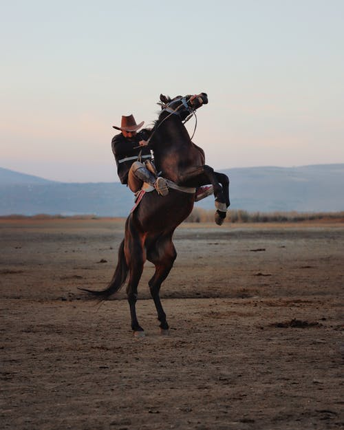 Cowboy in hat riding stubborn brown horse rearing up during ride in hilly valley at sunset
