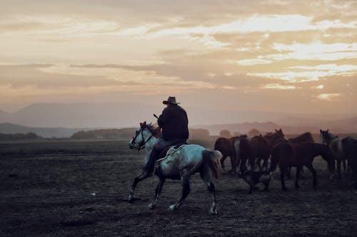 Man Riding Horse during Sunset