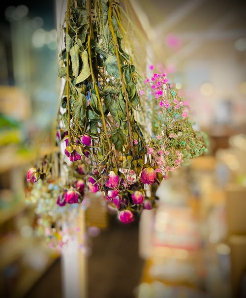 Free stock photo of beautiful flowers, dried flowers, flowers
