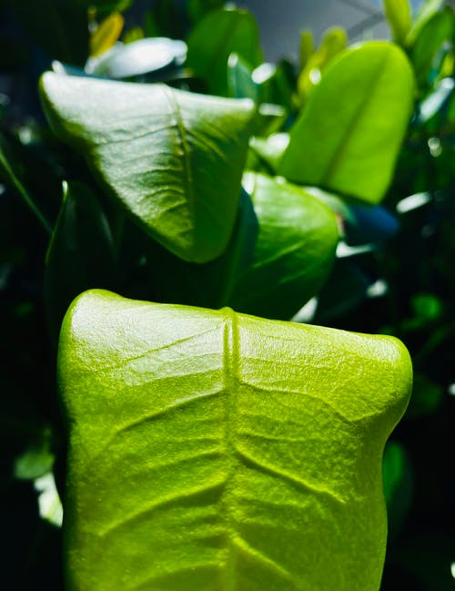 Free stock photo of green, green leaves, leaves