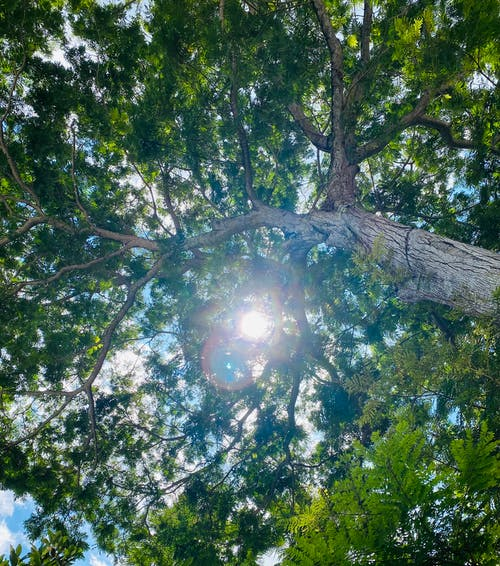 Free stock photo of against the light, nature, sunlight