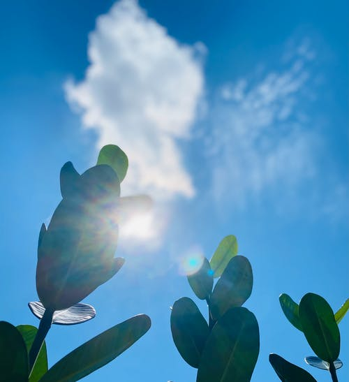 Free stock photo of against the light, beautiful sky, leaves