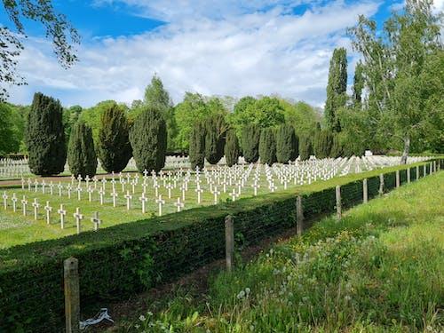 Free stock photo of cemetery, cross, plantation