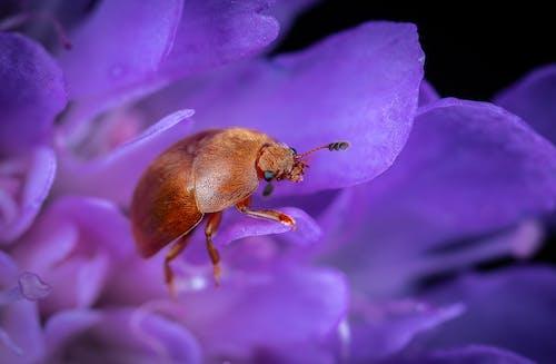 Immagine gratuita di biologia, cimice, colore