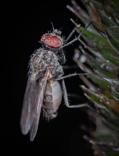 Immagine gratuita di ala, animale, antenna