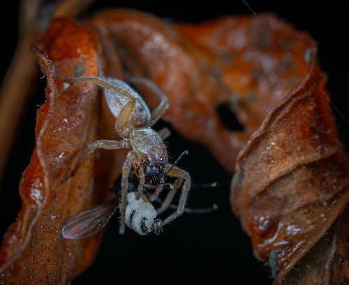Immagine gratuita di aracnide, caccia, cibo