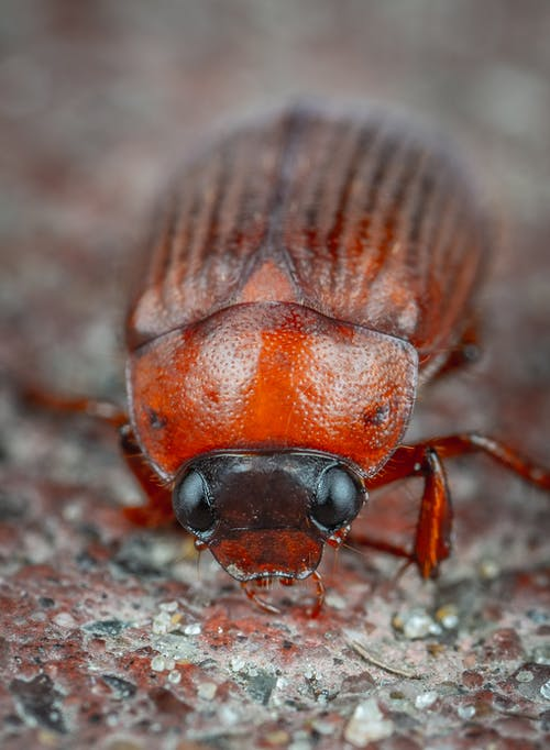 Immagine gratuita di animale, antenna, biologia