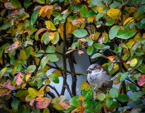Immagine gratuita di foglie, passero