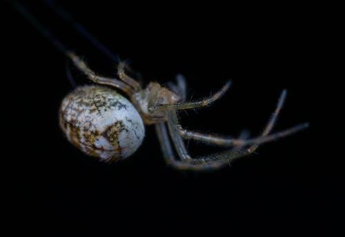 Immagine gratuita di macro, ragno