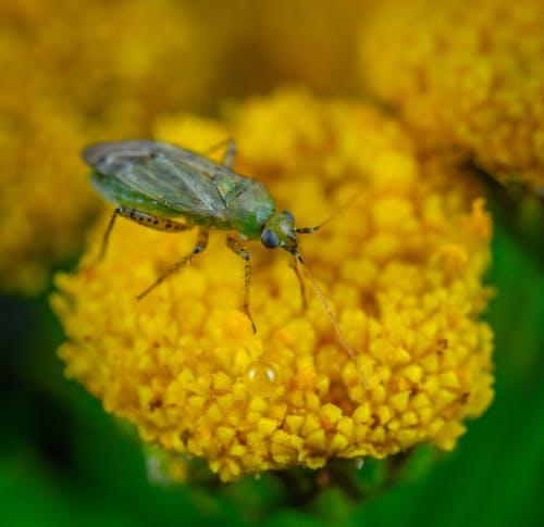 Immagine gratuita di entomologia, erba, estate