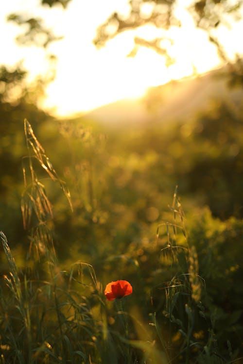 Бесплатное стоковое фото с аромат, Ароматический, ботаника