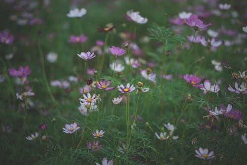 Selective Focus Photo of Purple Wildflowers