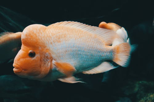 Free stock photo of animal, color, fish