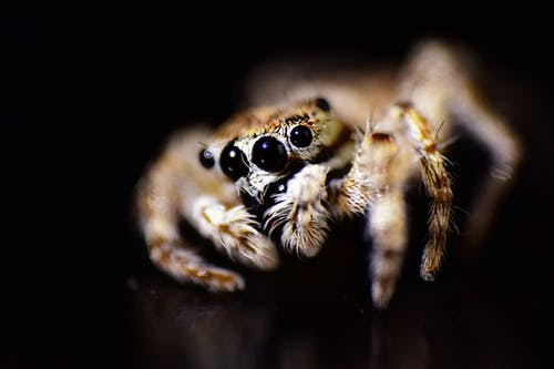 Free stock photo of #Spider #macrophotography #eyes #focus