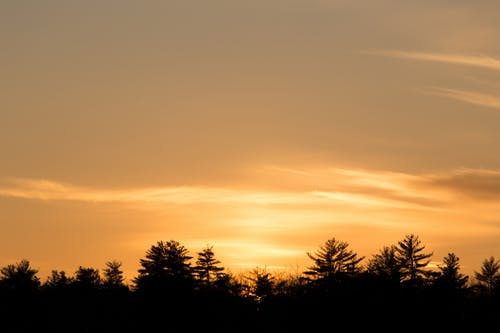 Kostenloses Stock Foto zu bäume, dämmerung, friedlich, friedvoll