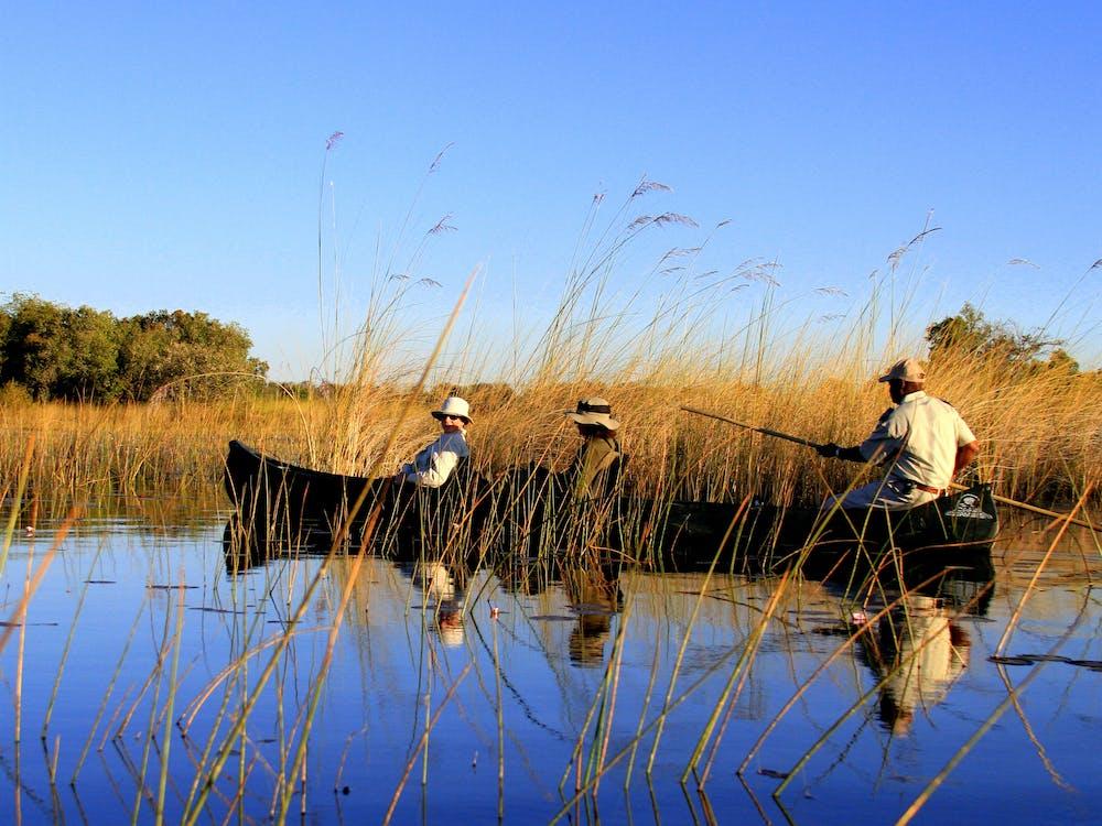 Free stock photo of adventure, botswana, holiday