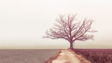 Landscape Photography of Withered Tree