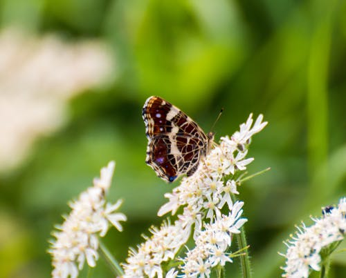 Free stock photo of butterfly, butterfly on a flower, nature
