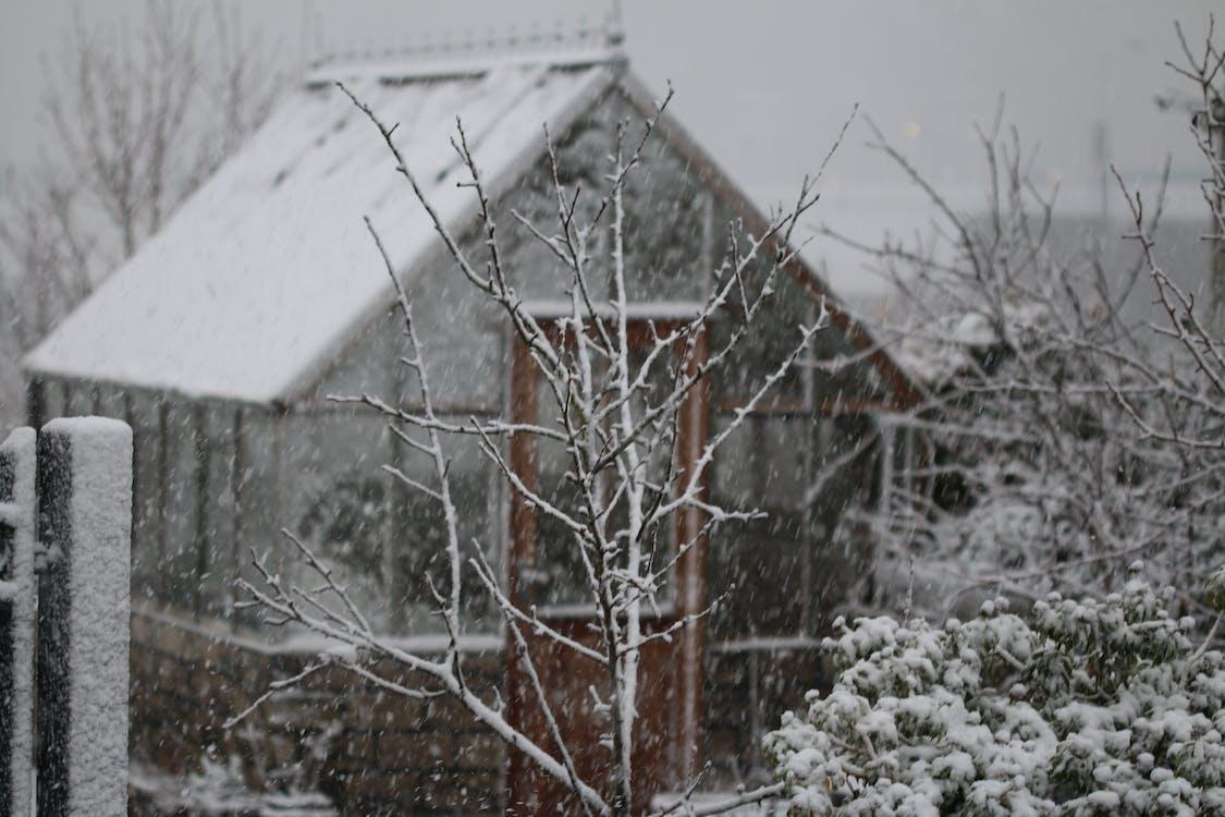 Θερμοκήπιο, χιόνι, χιονισμένος