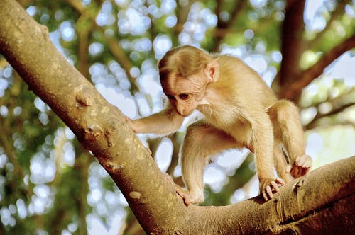 Photography of Monkey on Tree