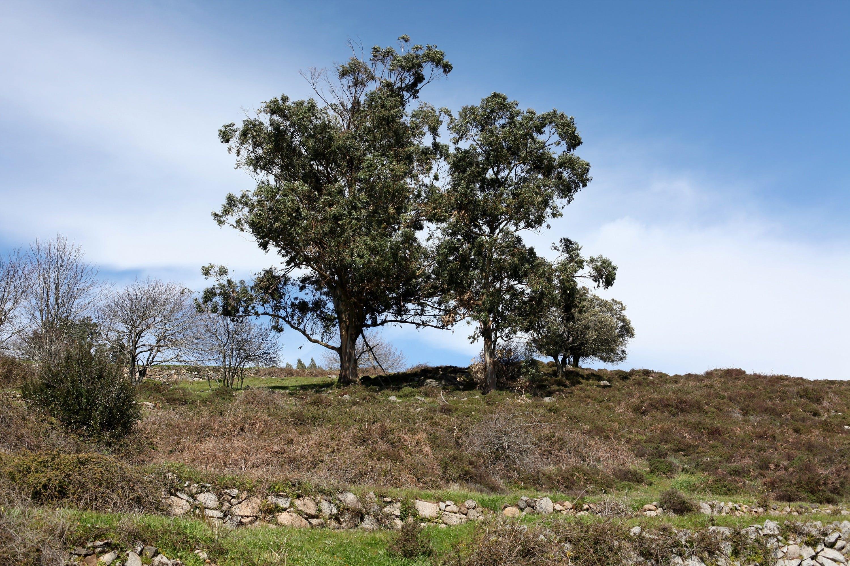 Free stock photo of nature, sky, tree
