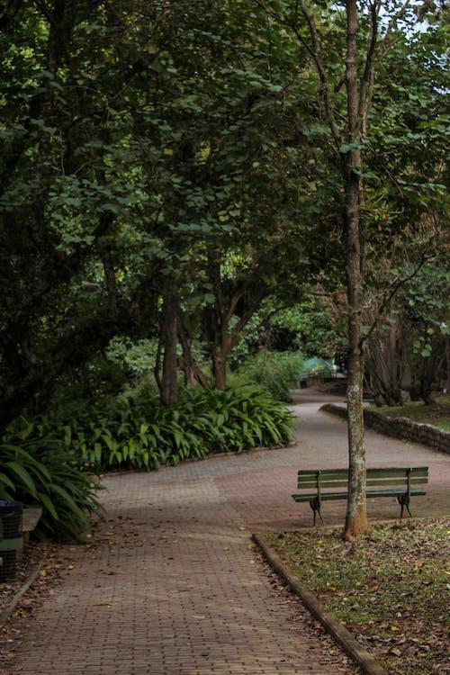 Ingyenes stockfotó fa, fű, gyalogút témában