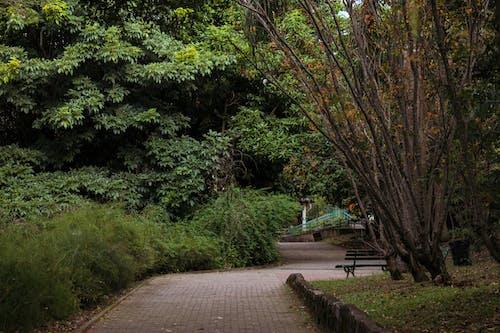 Ingyenes stockfotó esés, esik, fa témában