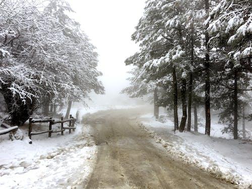 그리스, 눈, 산, 파르니 타의 무료 스톡 사진