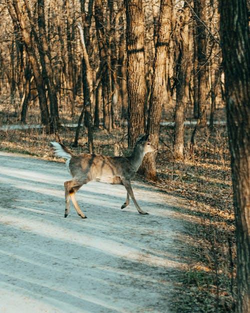 Brown Deer on Gray Road