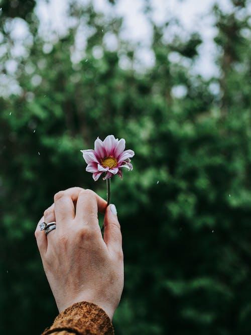 คลังภาพถ่ายฟรี ของ ดอกไม้, ฝน, มือ