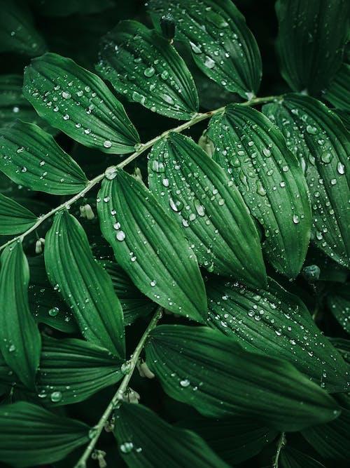 คลังภาพถ่ายฟรี ของ ฝน, ฝนตก, ใบไม้