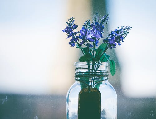Close-Up Photography of Purple Flowers in Clear Glass Vase