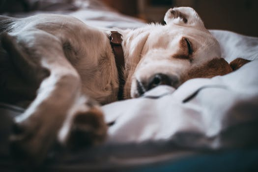 Close-Up Photography of Sleeping Dog