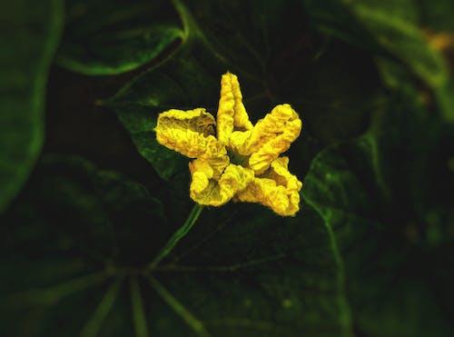 Immagine gratuita di bel fiore, bocciolo, colori autunnali