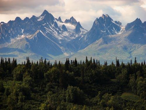 Foto profissional grátis de Alasca, floresta, madeira, montanhas